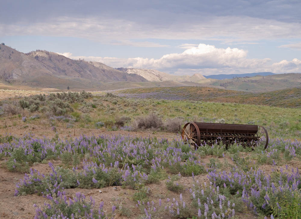 Wildflowers & old farm equipment.